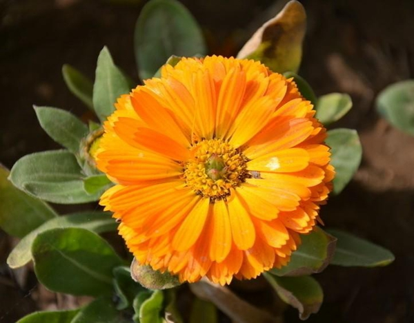 Lutein 10% from Marigold