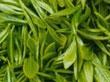 Natural Omega 7, palmitoleic acid